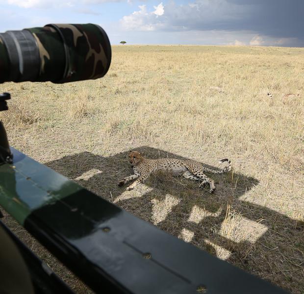 Cheetah So Close – Masai Mara